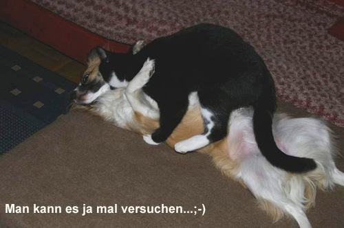 funny dogs tiere in not griechenland